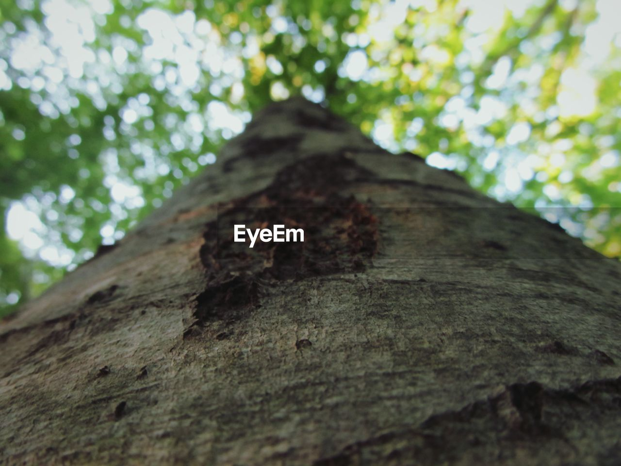 tree trunk, tree, nature, textured, growth, day, no people, bark, wood - material, low angle view, outdoors, rough, close-up, beauty in nature