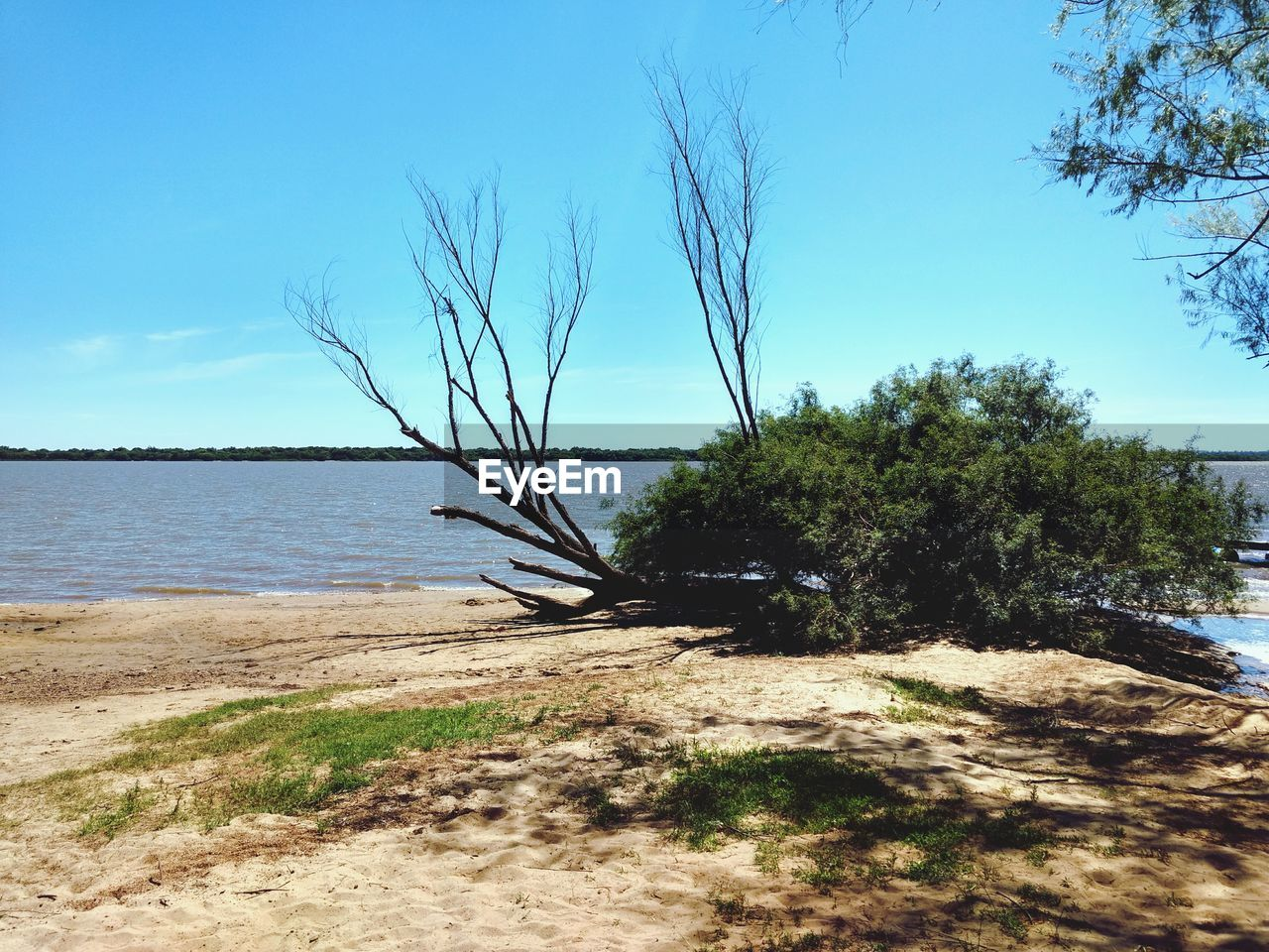 tree, nature, tranquility, tranquil scene, beauty in nature, day, scenics, sky, water, sea, sand, no people, outdoors, beach, sunlight, growth, horizon over water