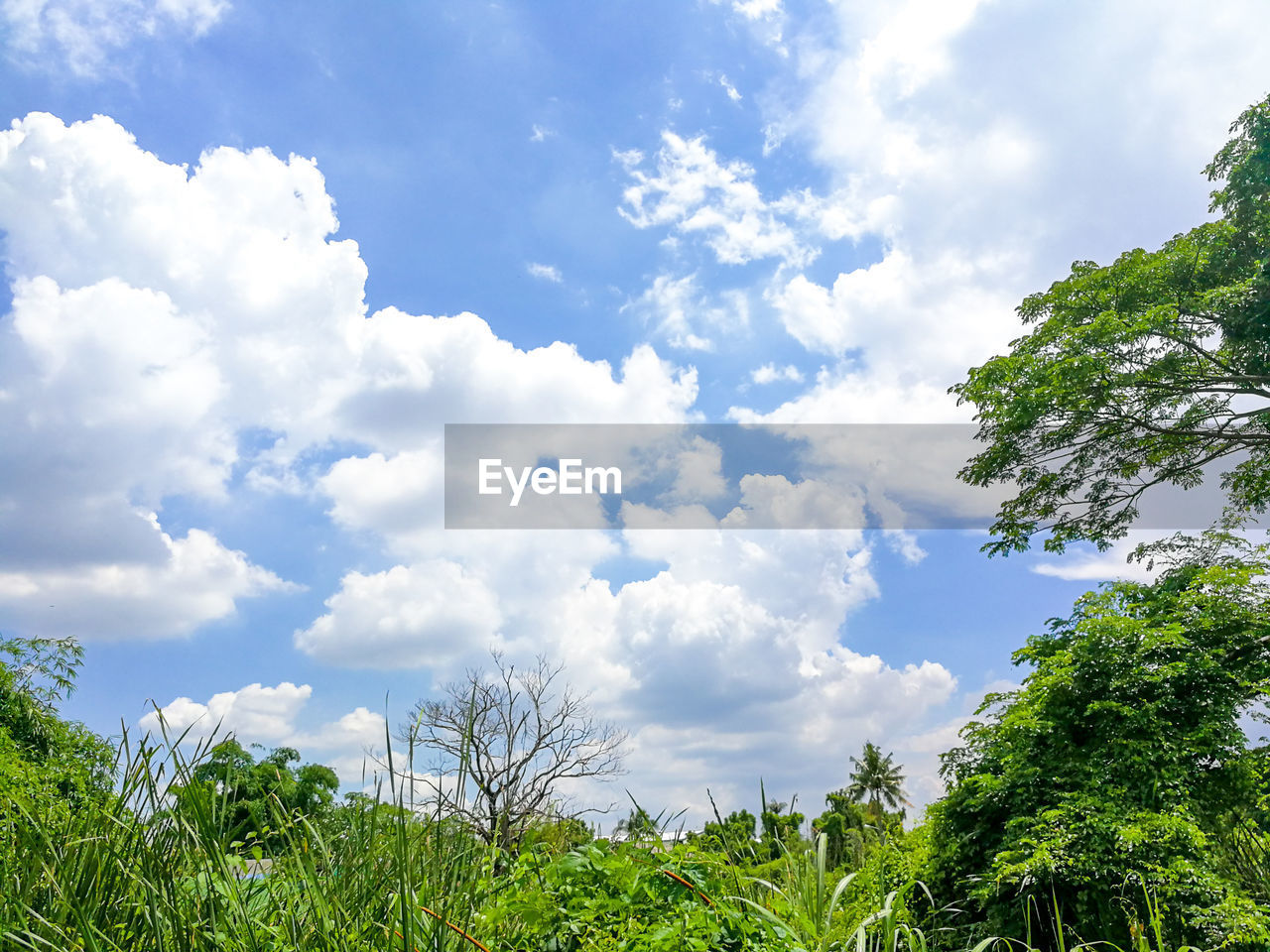 cloud - sky, sky, plant, beauty in nature, tree, growth, tranquility, nature, scenics - nature, day, green color, tranquil scene, no people, outdoors, low angle view, non-urban scene, land, idyllic, environment, grass