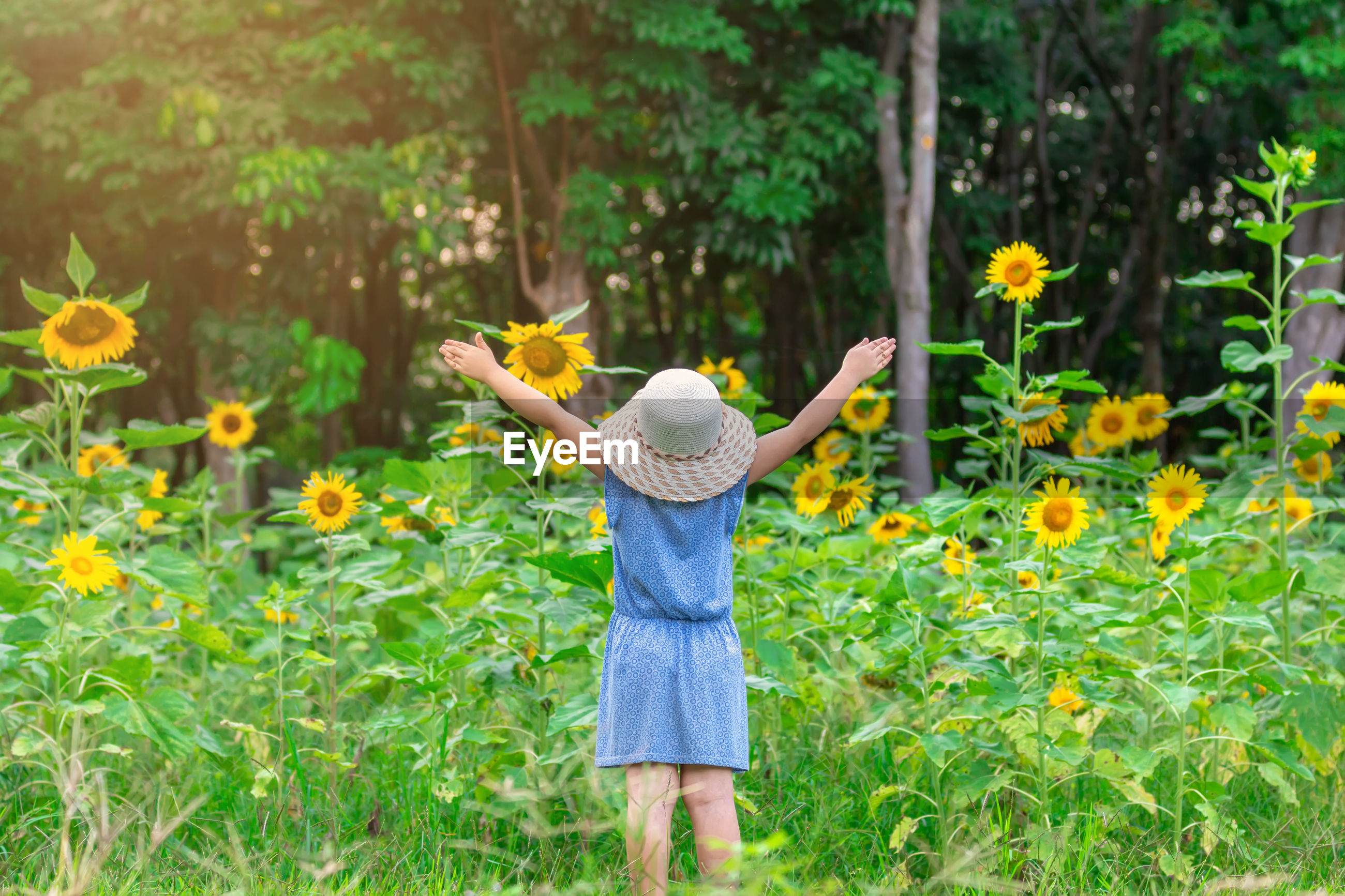 Rear view of woman with arms raised standing by sunflowers on field