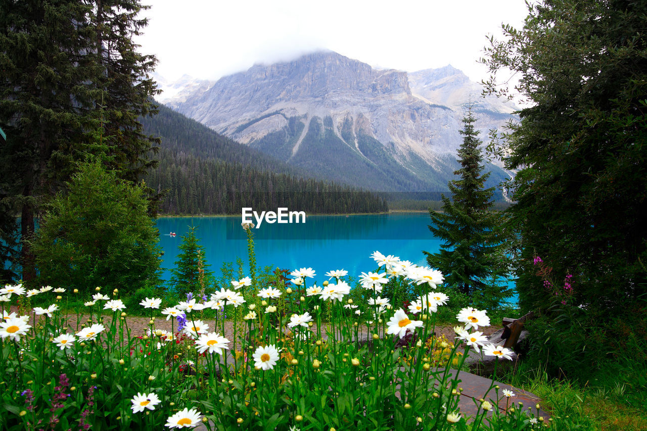 plant, mountain, beauty in nature, flower, water, scenics - nature, flowering plant, tree, growth, tranquil scene, tranquility, nature, lake, green color, day, no people, mountain range, freshness, land, outdoors, mountain peak