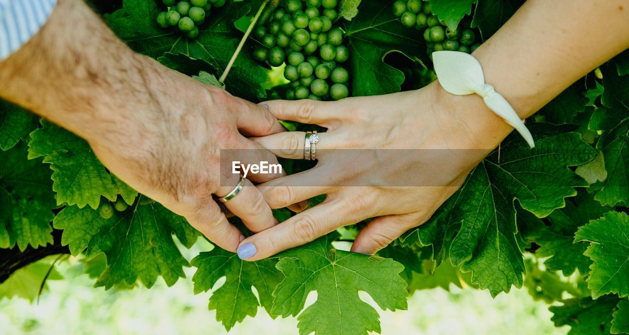 Midsection Of Couple Holding Hands Over Plant