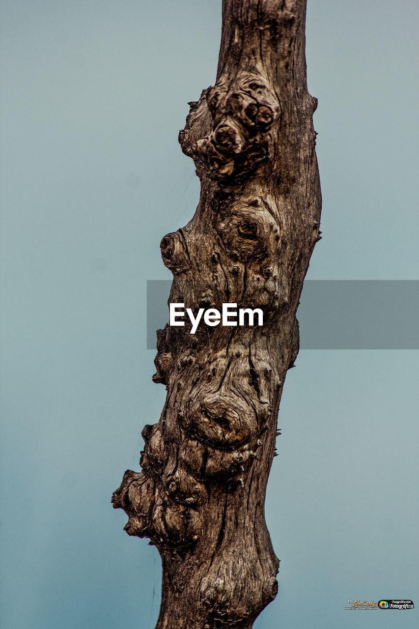 no people, textured, nature, tree trunk, day, close-up, tree, outdoors