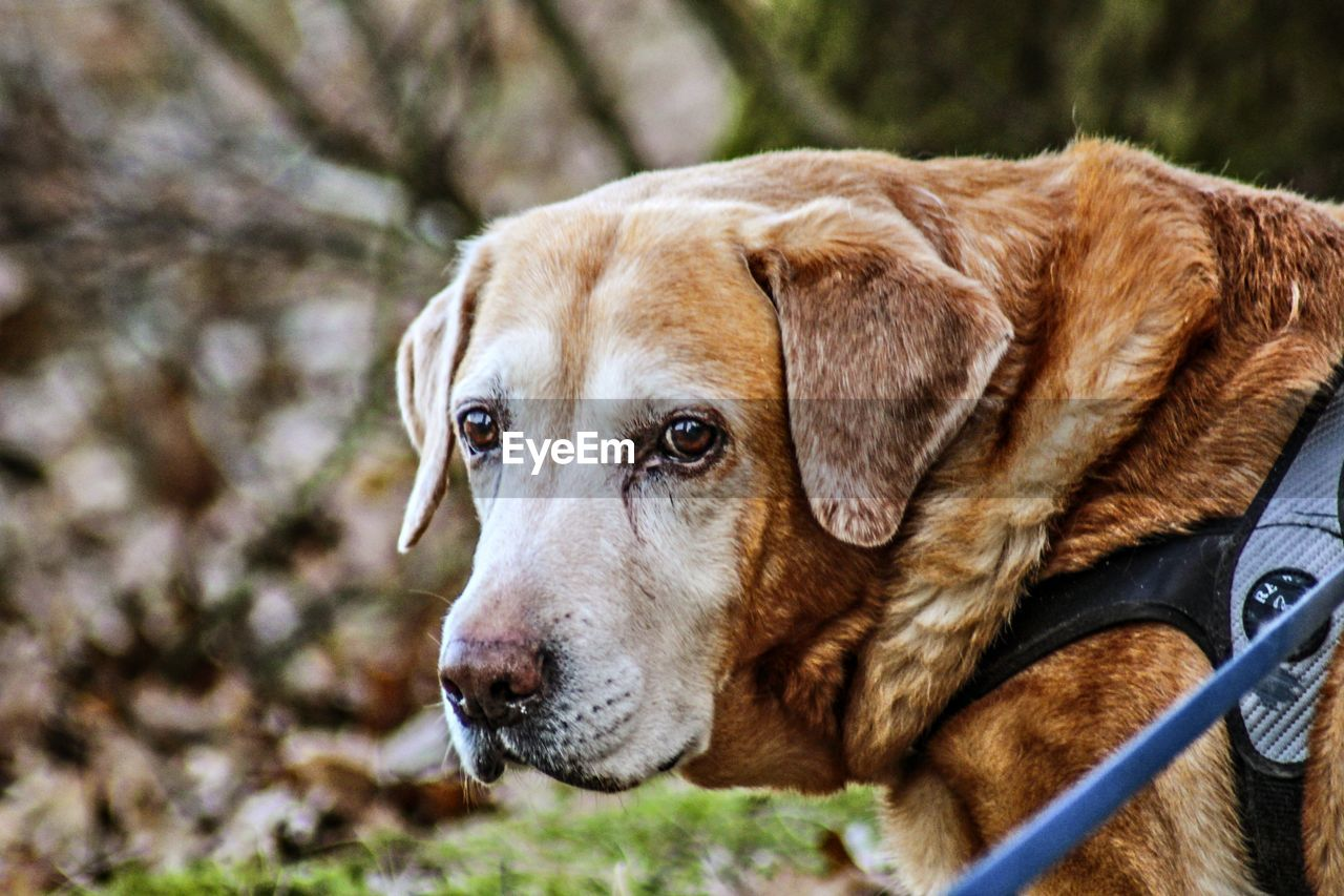 dog, pets, one animal, domestic animals, animal themes, focus on foreground, close-up, mammal, day, no people, outdoors, nature