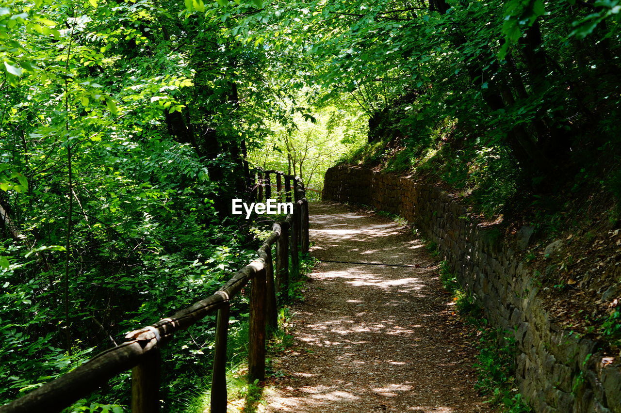 tree, the way forward, railing, nature, green color, tranquility, growth, beauty in nature, outdoors, no people, forest, day