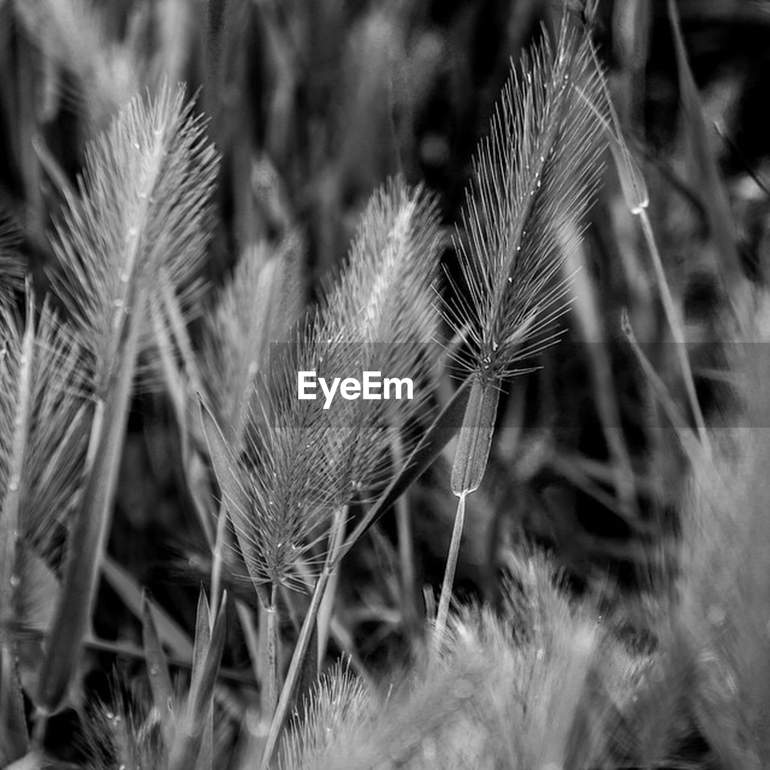 growth, plant, close-up, focus on foreground, grass, nature, field, dry, selective focus, fragility, stem, uncultivated, beauty in nature, day, growing, tranquility, outdoors, no people, freshness, thorn