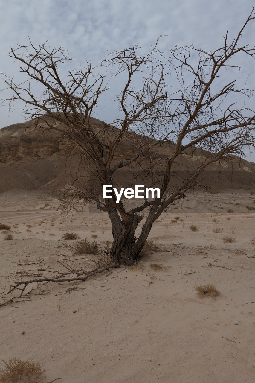 land, tree, bare tree, environment, tranquility, plant, sand, sky, scenics - nature, non-urban scene, landscape, nature, no people, branch, climate, tranquil scene, arid climate, desert, beauty in nature, remote, outdoors, dead plant