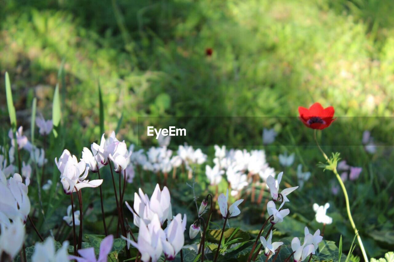 flower, growth, nature, petal, fragility, beauty in nature, plant, freshness, blooming, no people, day, flower head, outdoors, close-up