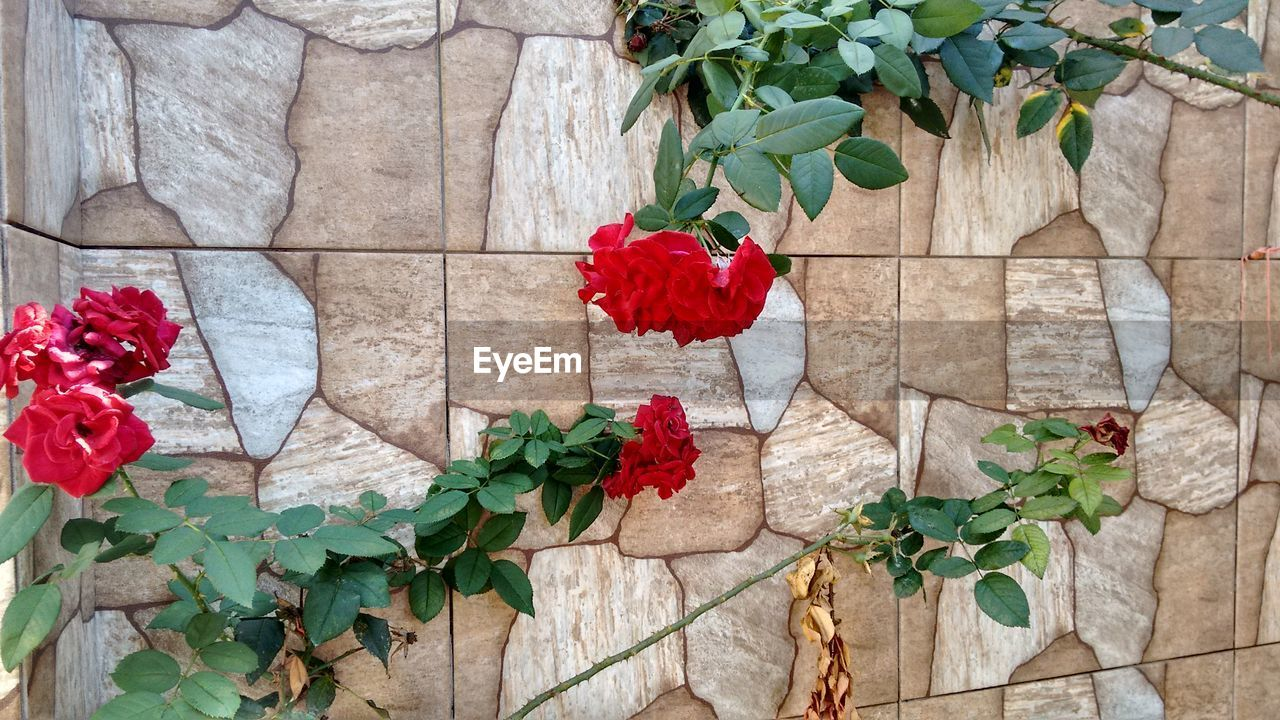 plant, leaf, growth, flower, potted plant, ivy, red, nature, green, green color, no people, outdoors, bougainvillea, day, petal, blooming, architecture, fragility, freshness, branch, beauty in nature, building exterior, flower head, close-up, window box, periwinkle