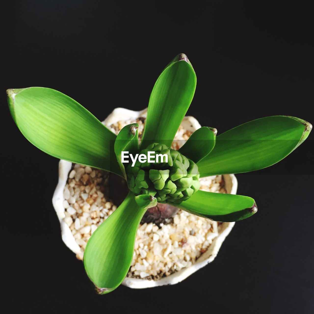 Close-up high angle view of pot plant over black background