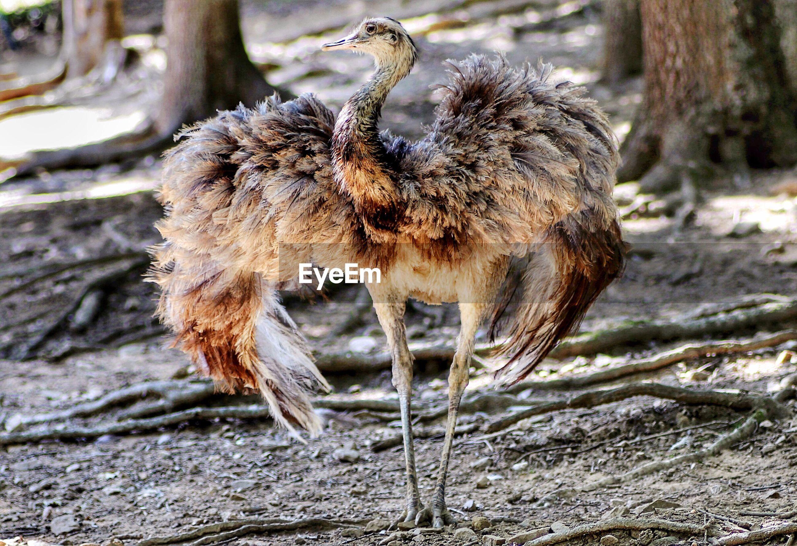 CLOSE-UP OF A BIRD ON NEST
