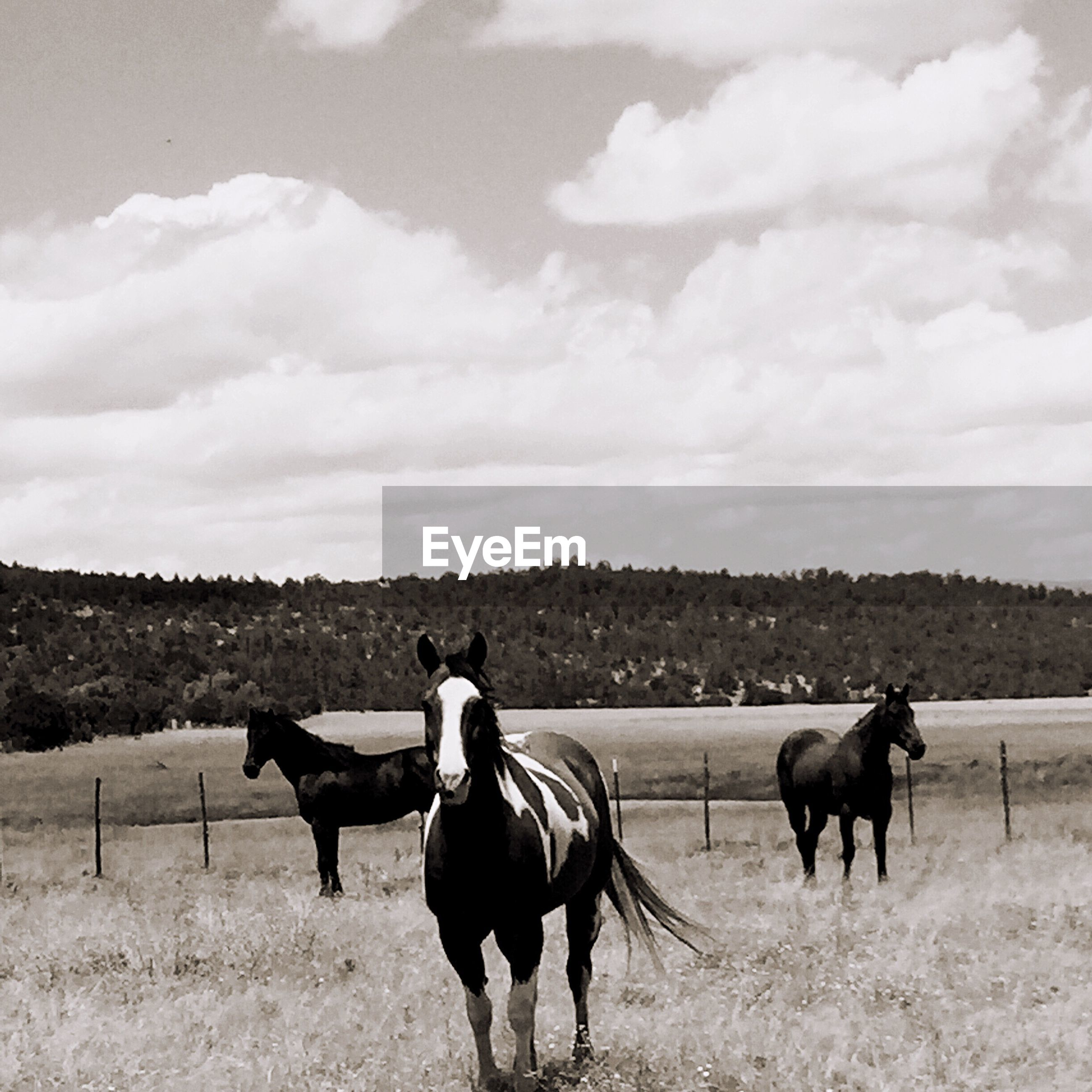 Horses on countryside landscape