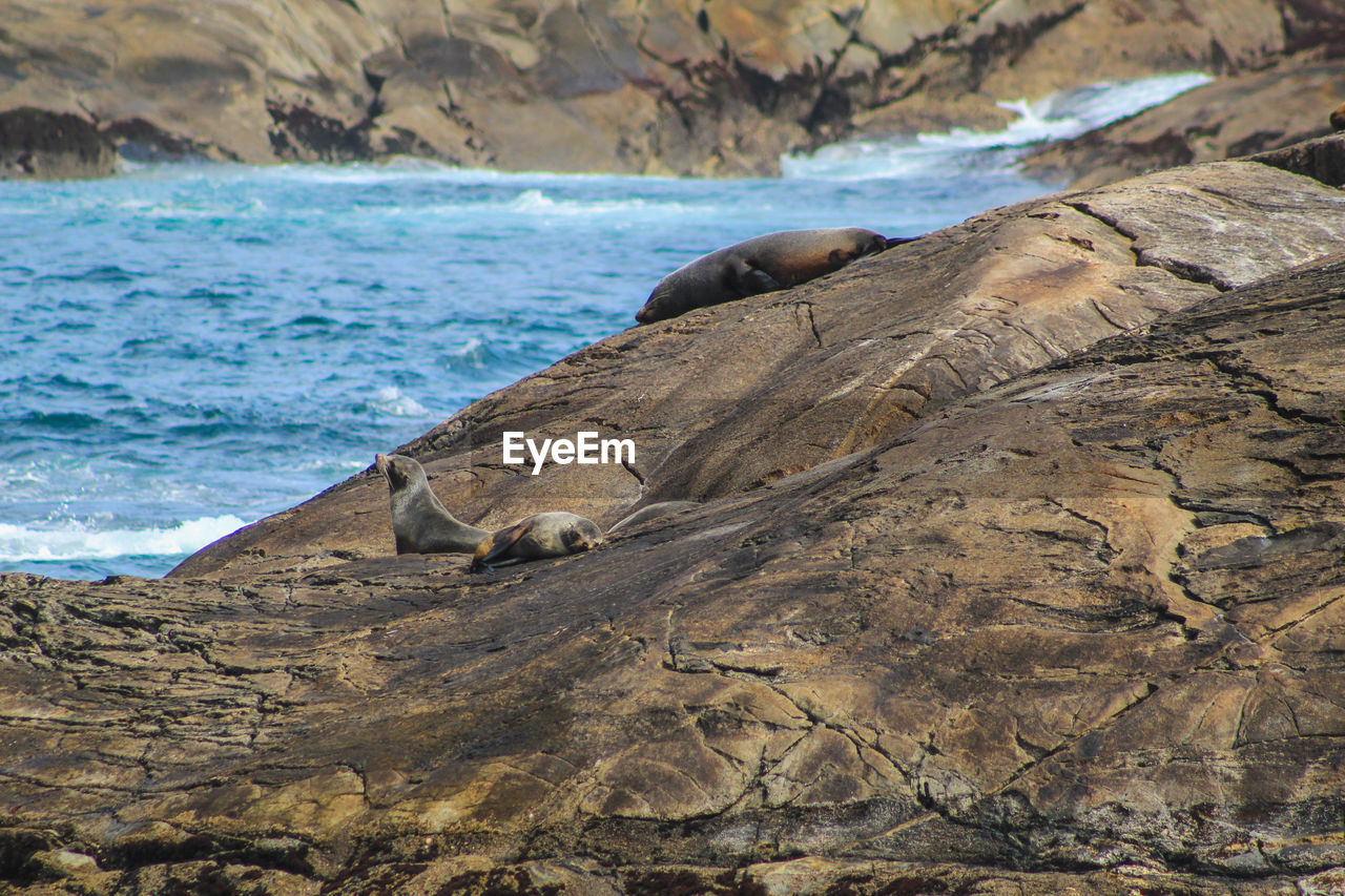 sea, water, rock, rock - object, beach, solid, mammal, nature, underwater, land, no people, animals in the wild, group of animals, animal, animal themes, animal wildlife, day, beauty in nature, vertebrate, outdoors, seal - animal, marine