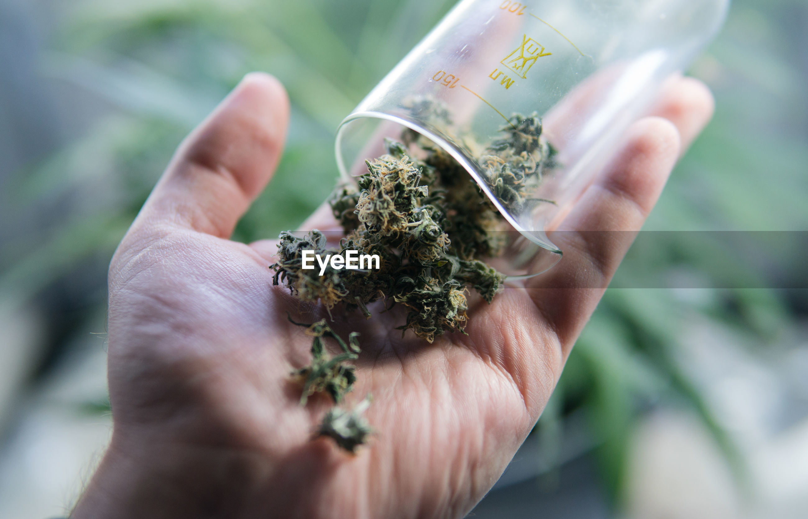 Cropped hand holding container with marijuana joint
