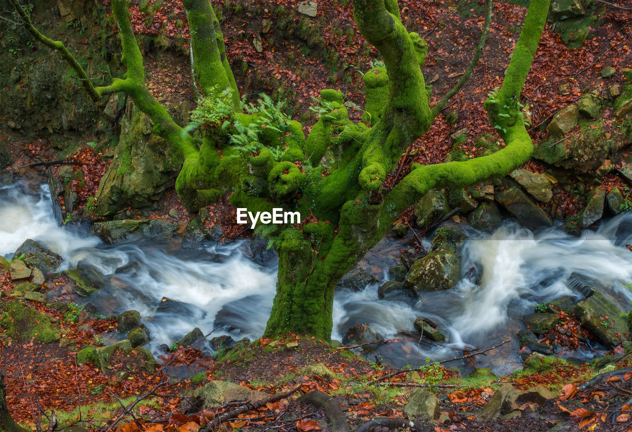 water, motion, long exposure, no people, land, beauty in nature, moss, forest, nature, plant, rock, scenics - nature, blurred motion, rock - object, tree, day, flowing, waterfall, environment, flowing water, outdoors, stream - flowing water, rainforest, power in nature, purity