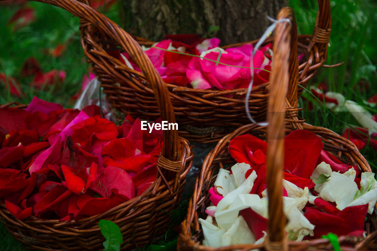 basket, flower, petal, fragility, nature, growth, beauty in nature, red, no people, flower head, freshness, day, outdoors, plant, close-up