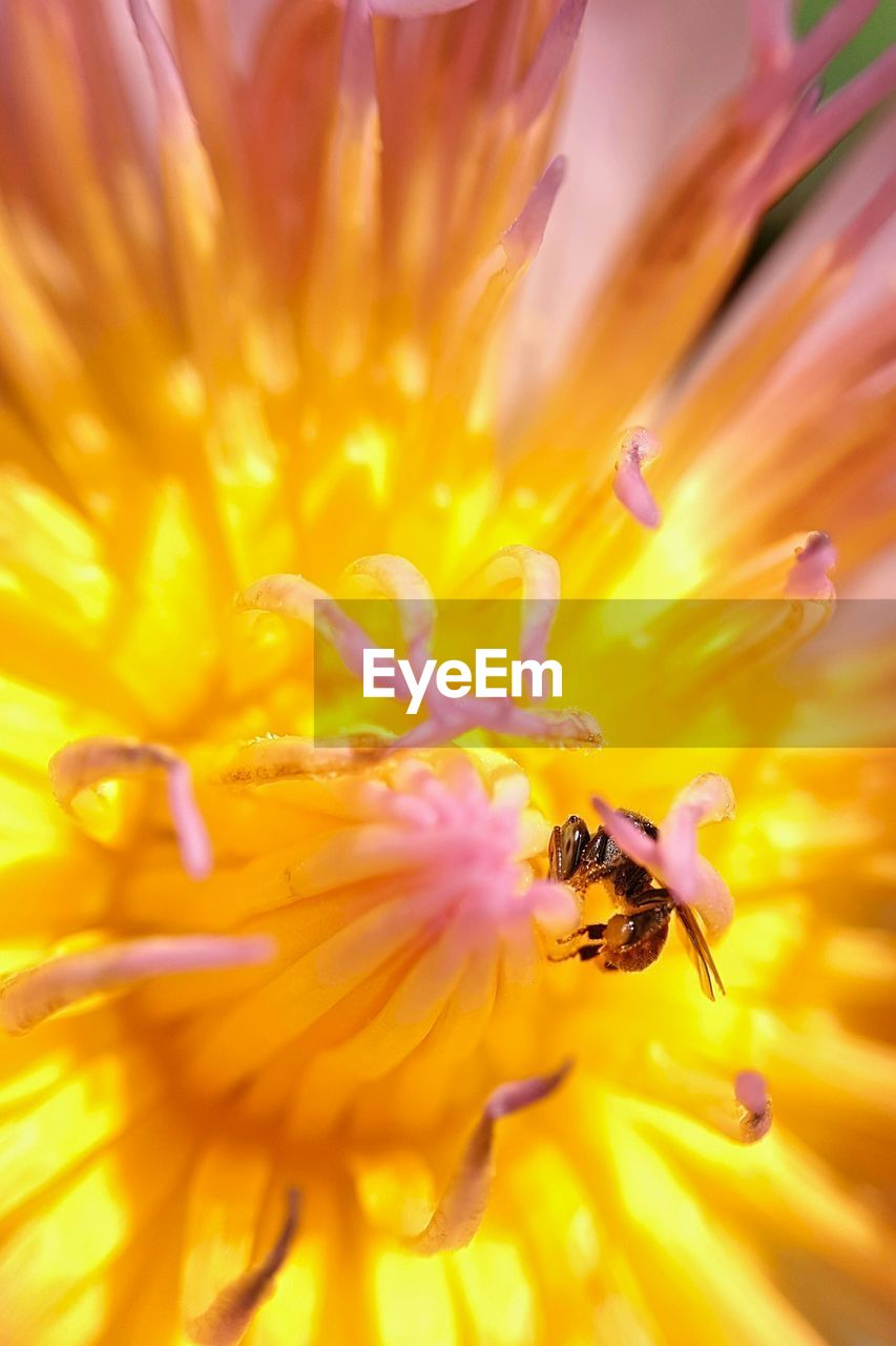 flower, flowering plant, fragility, petal, beauty in nature, freshness, vulnerability, flower head, plant, inflorescence, growth, pollen, yellow, close-up, nature, invertebrate, bee, animal wildlife, animals in the wild, no people, pollination, outdoors