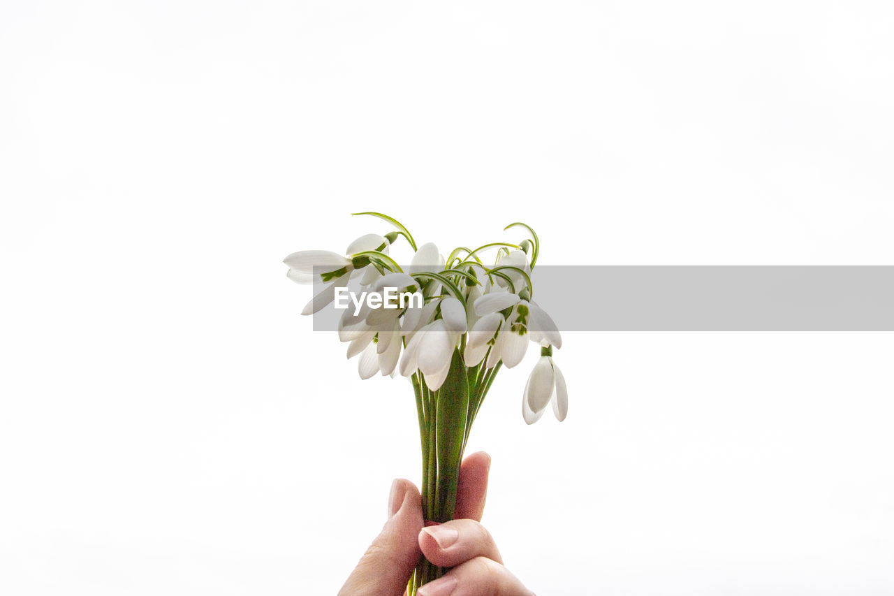 CLOSE-UP OF HAND HOLDING WHITE FLOWERING PLANT AGAINST CLEAR BACKGROUND