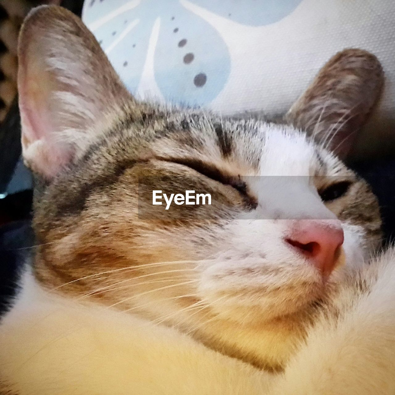 pets, domestic animals, domestic cat, one animal, animal themes, eyes closed, mammal, sleeping, indoors, cat, close-up, feline, whisker, relaxation, no people, day