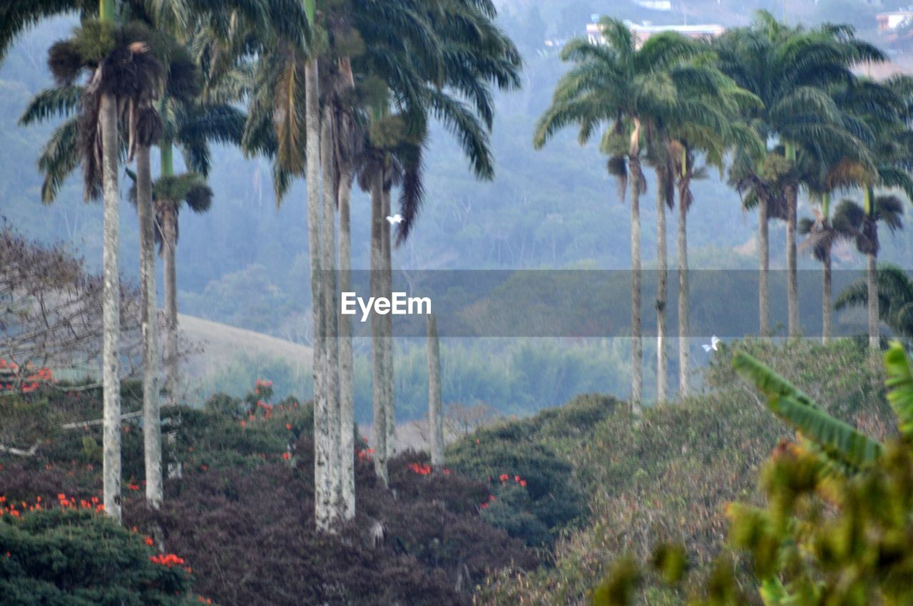 tree, palm tree, nature, growth, outdoors, no people, day, scenics, plant, beauty in nature, water