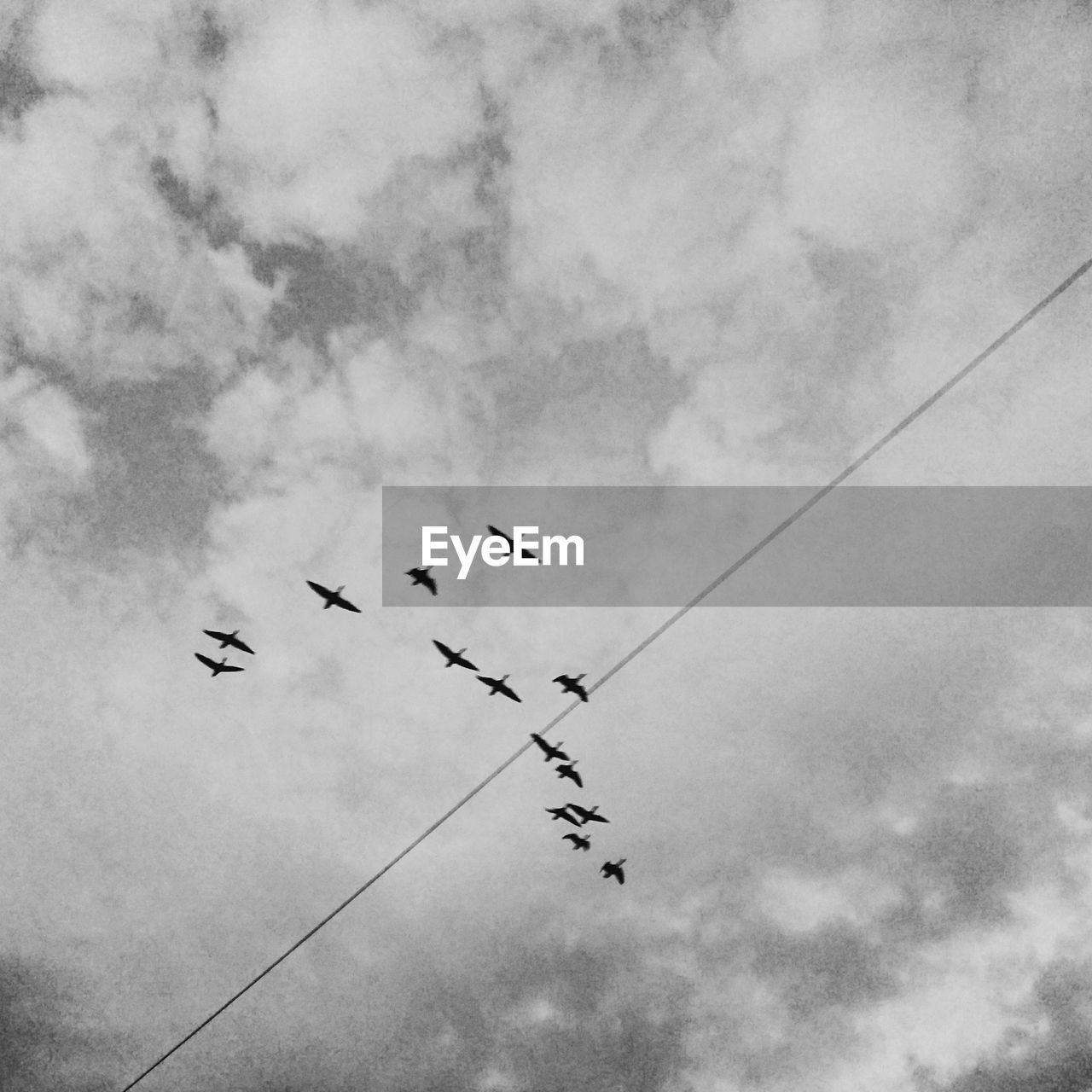 flying, sky, low angle view, bird, cloud - sky, animals in the wild, animal themes, flock of birds, large group of animals, outdoors, day, mid-air, migrating, togetherness, animal wildlife, no people, nature, teamwork, airshow, spread wings