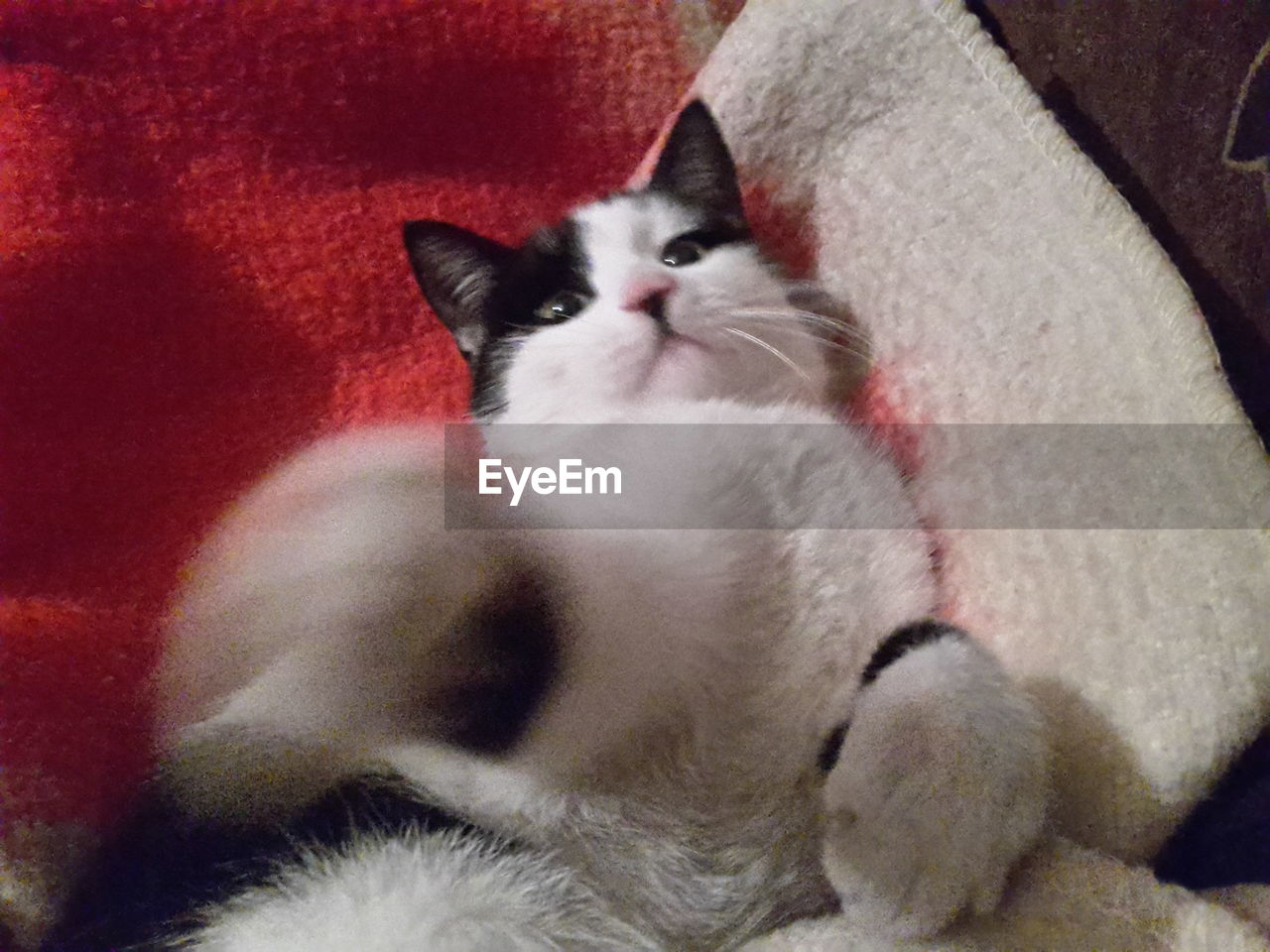 domestic cat, pets, domestic animals, cat, feline, mammal, animal themes, one animal, no people, indoors, close-up, day