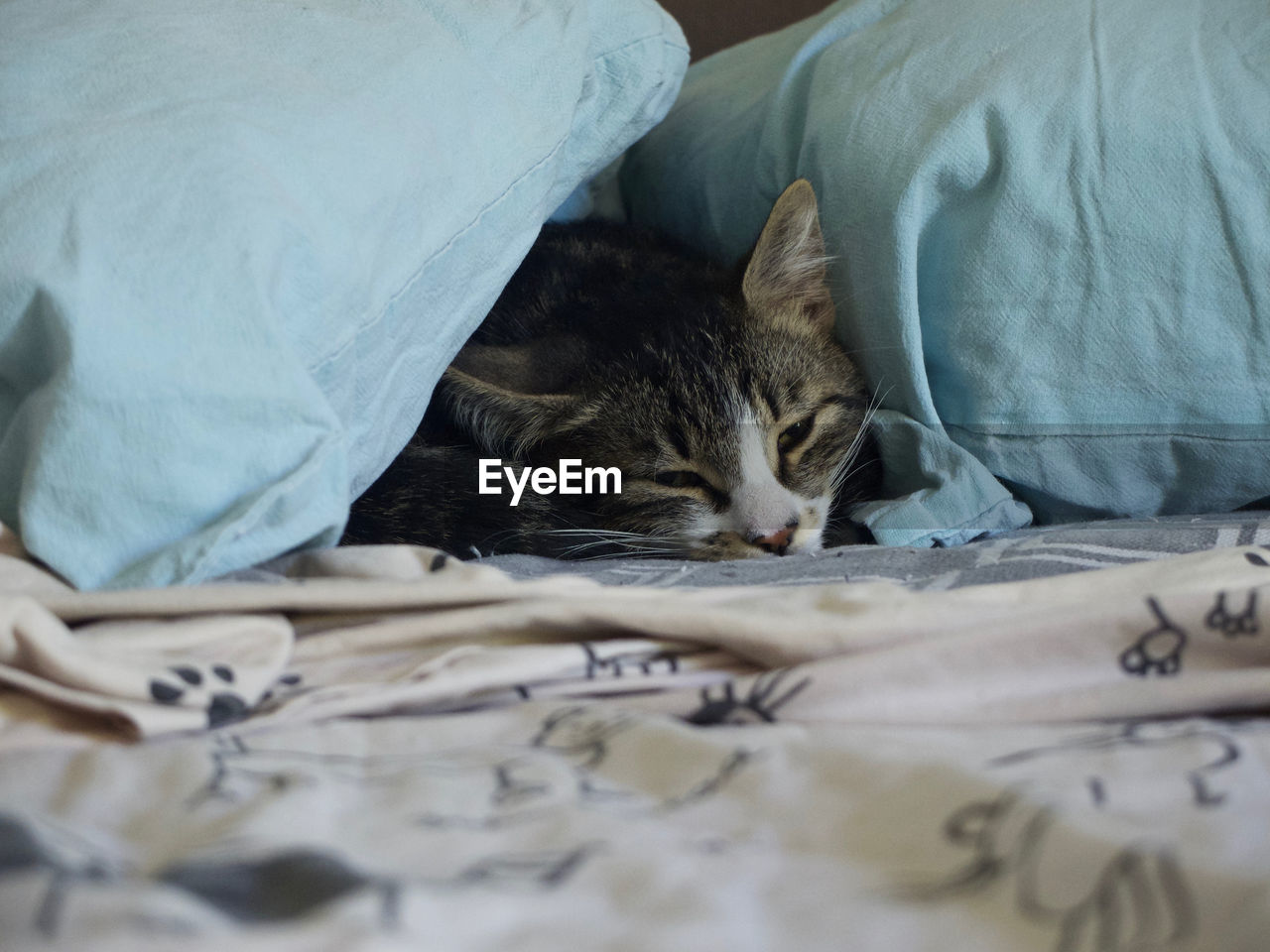 domestic, pets, mammal, domestic animals, domestic cat, animal themes, cat, bed, animal, vertebrate, feline, relaxation, one animal, furniture, indoors, sleeping, sheet, bedroom, home interior, textile, no people, whisker, duvet