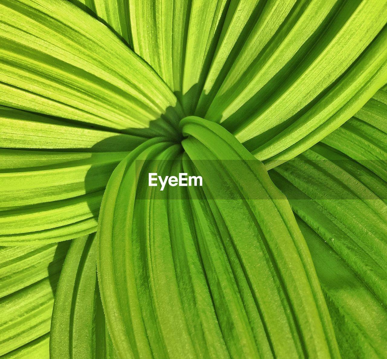 Full frame of green leaf