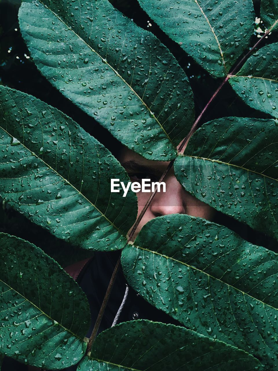Portrait Of Man Looking Through Wet Plants