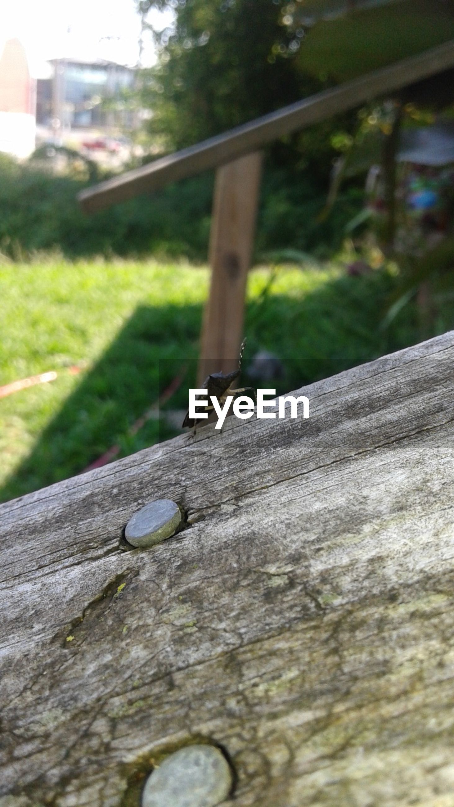 focus on foreground, close-up, tree trunk, tree, wood - material, textured, selective focus, part of, day, old, growth, metal, wooden, outdoors, cropped, weathered, wood, rusty, no people, built structure