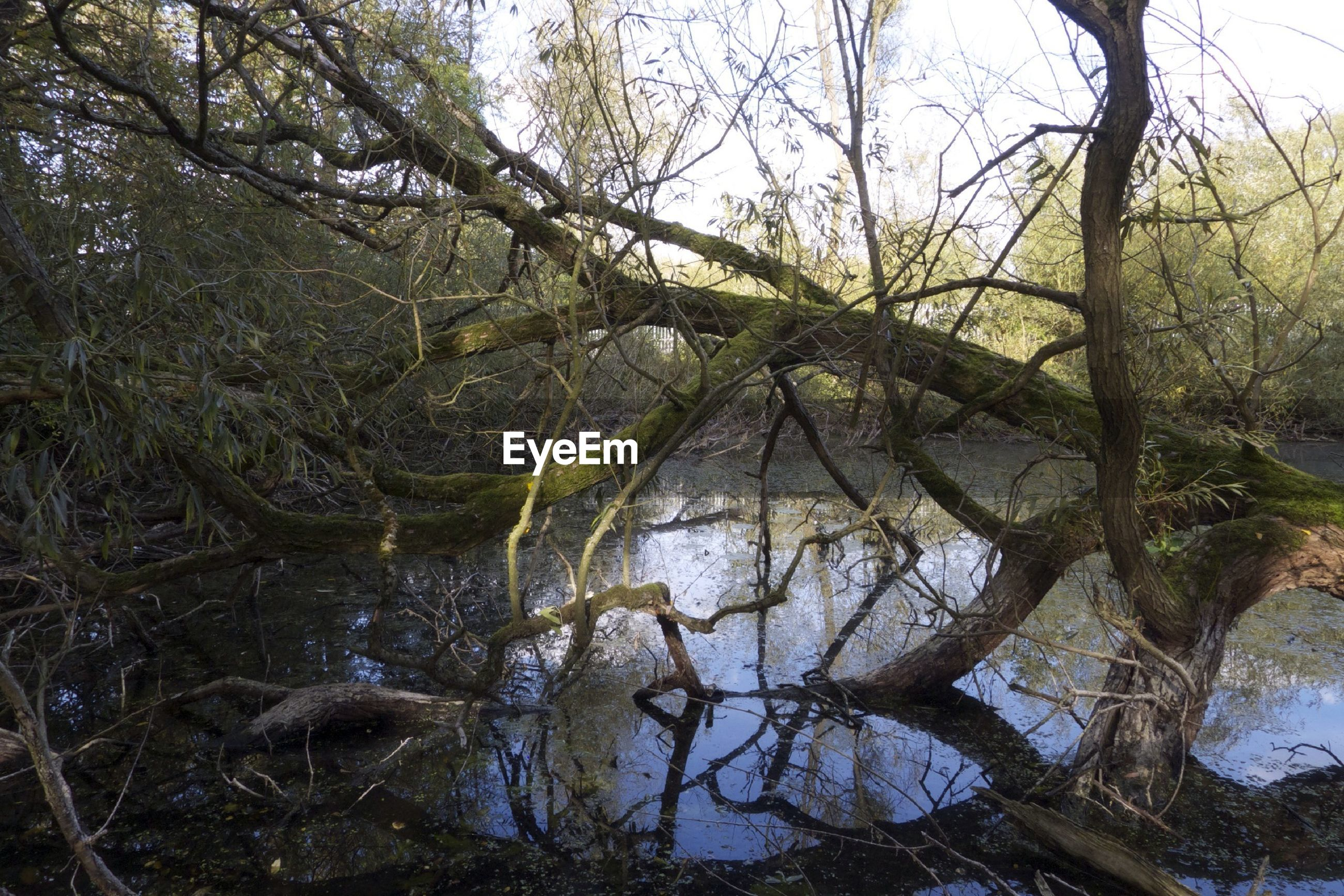 BARE TREES IN WATER