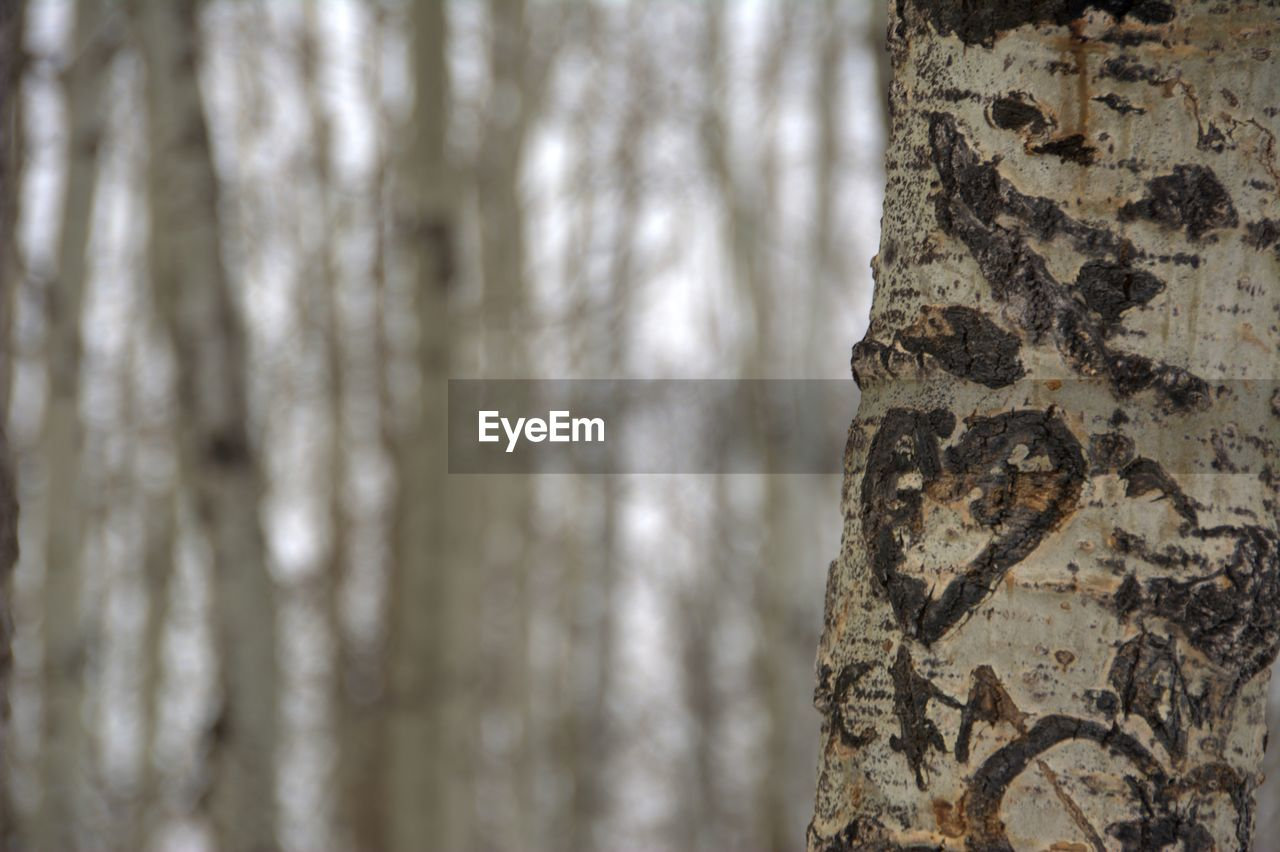 tree trunk, tree, trunk, focus on foreground, textured, pattern, plant, no people, day, close-up, nature, outdoors, plant bark, natural pattern, animal themes, animal, beauty in nature, rough, forest, full frame, floral pattern