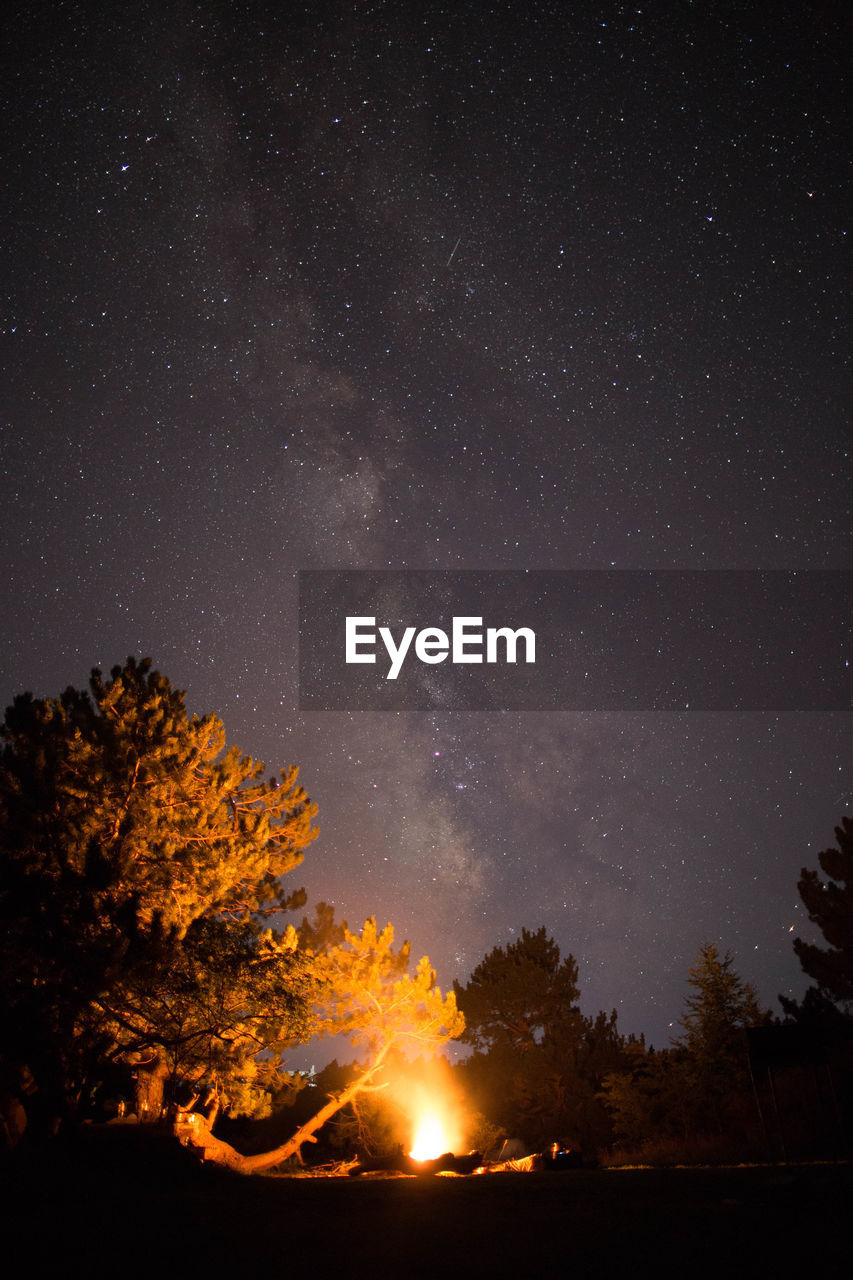 night, star - space, sky, space, astronomy, beauty in nature, tree, scenics - nature, burning, nature, no people, fire, plant, flame, tranquility, galaxy, fire - natural phenomenon, low angle view, star, tranquil scene, outdoors, milky way