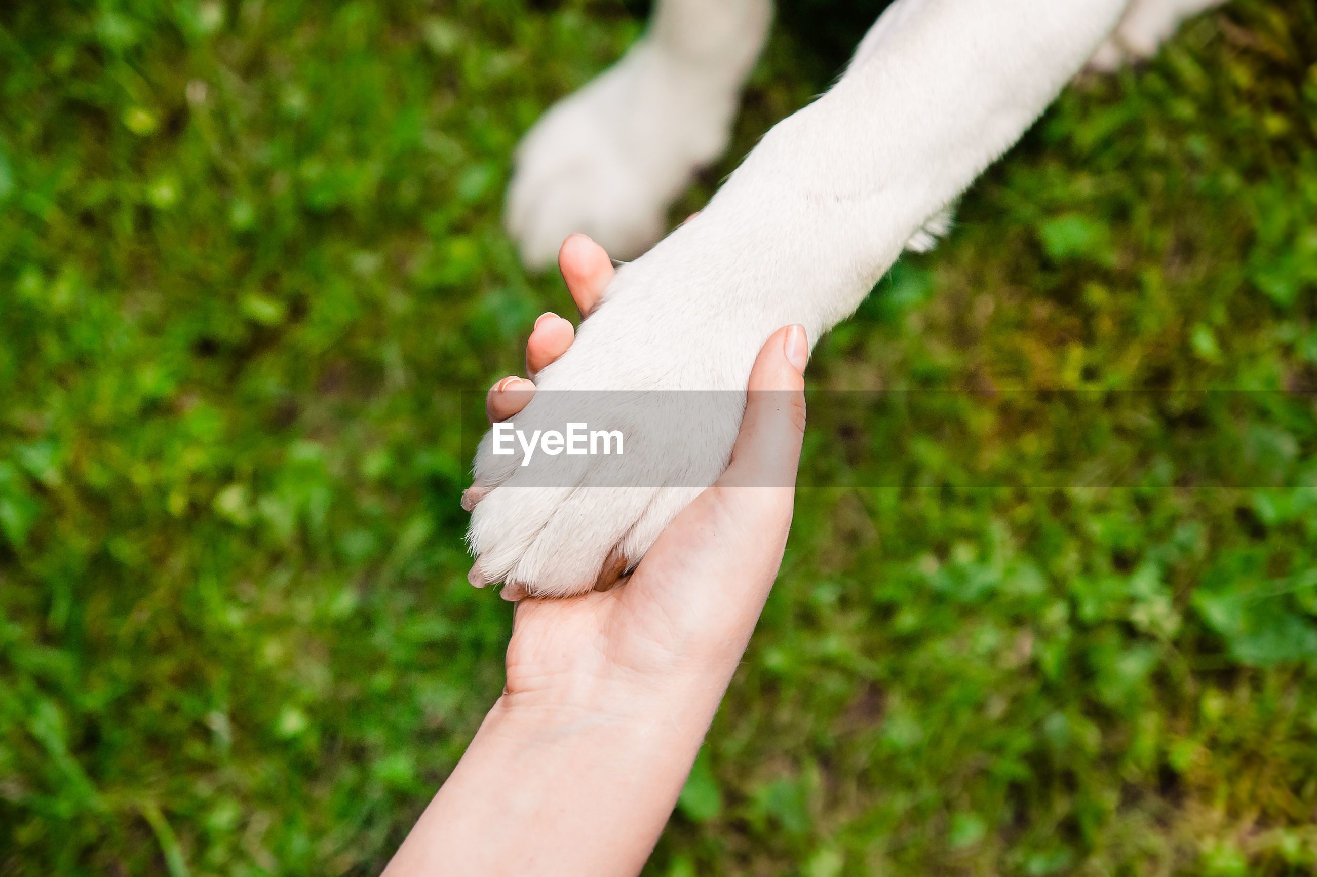 Close-up of hand holding dogs paw