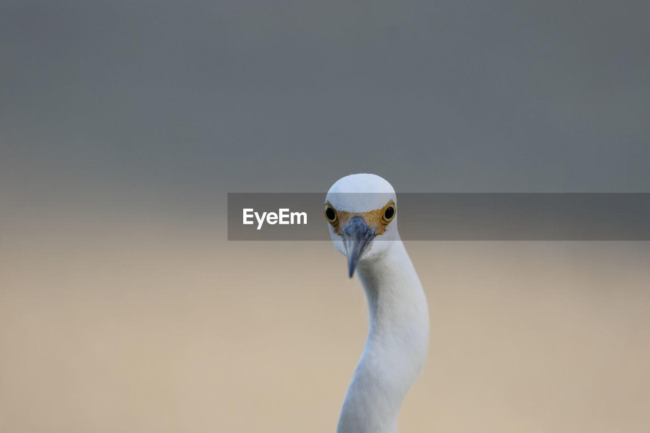 Portrait Of Heron Against Sky