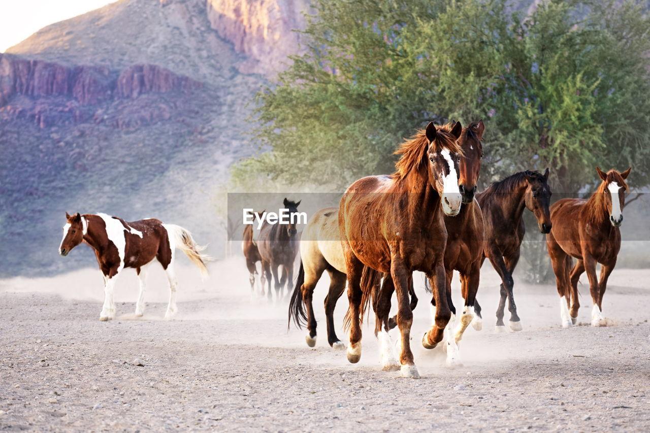 Horses on landscape against plants