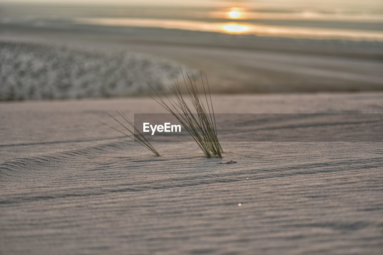 wood - material, selective focus, sunset, nature, land, close-up, plant, no people, sky, beauty in nature, cereal plant, outdoors, sand, table, agriculture, crop, scenics - nature, focus on foreground, still life, tranquility, surface level