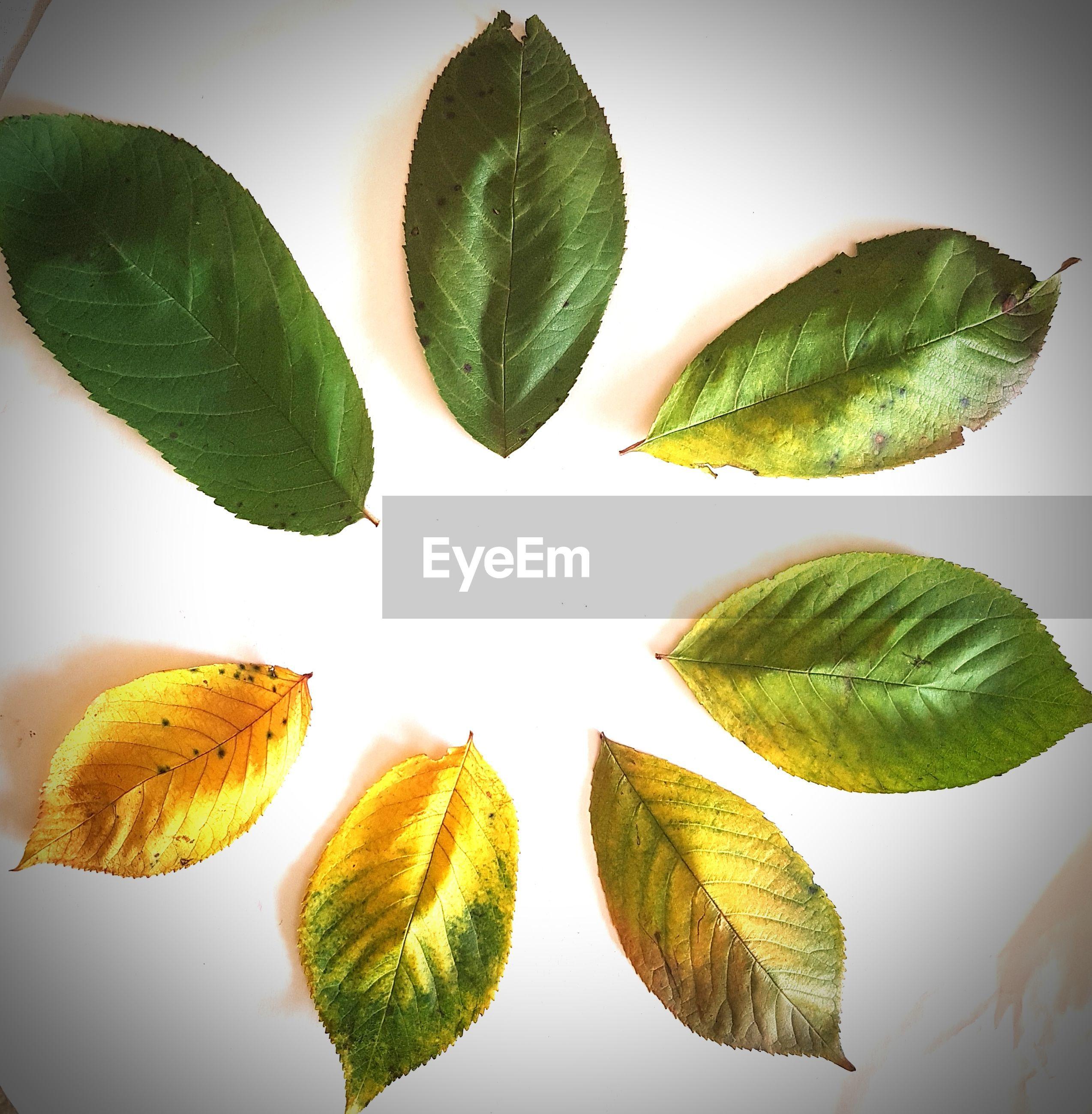 leaf, food, fruit, freshness, green color, white background, plant, studio shot, no people, healthy eating, close-up