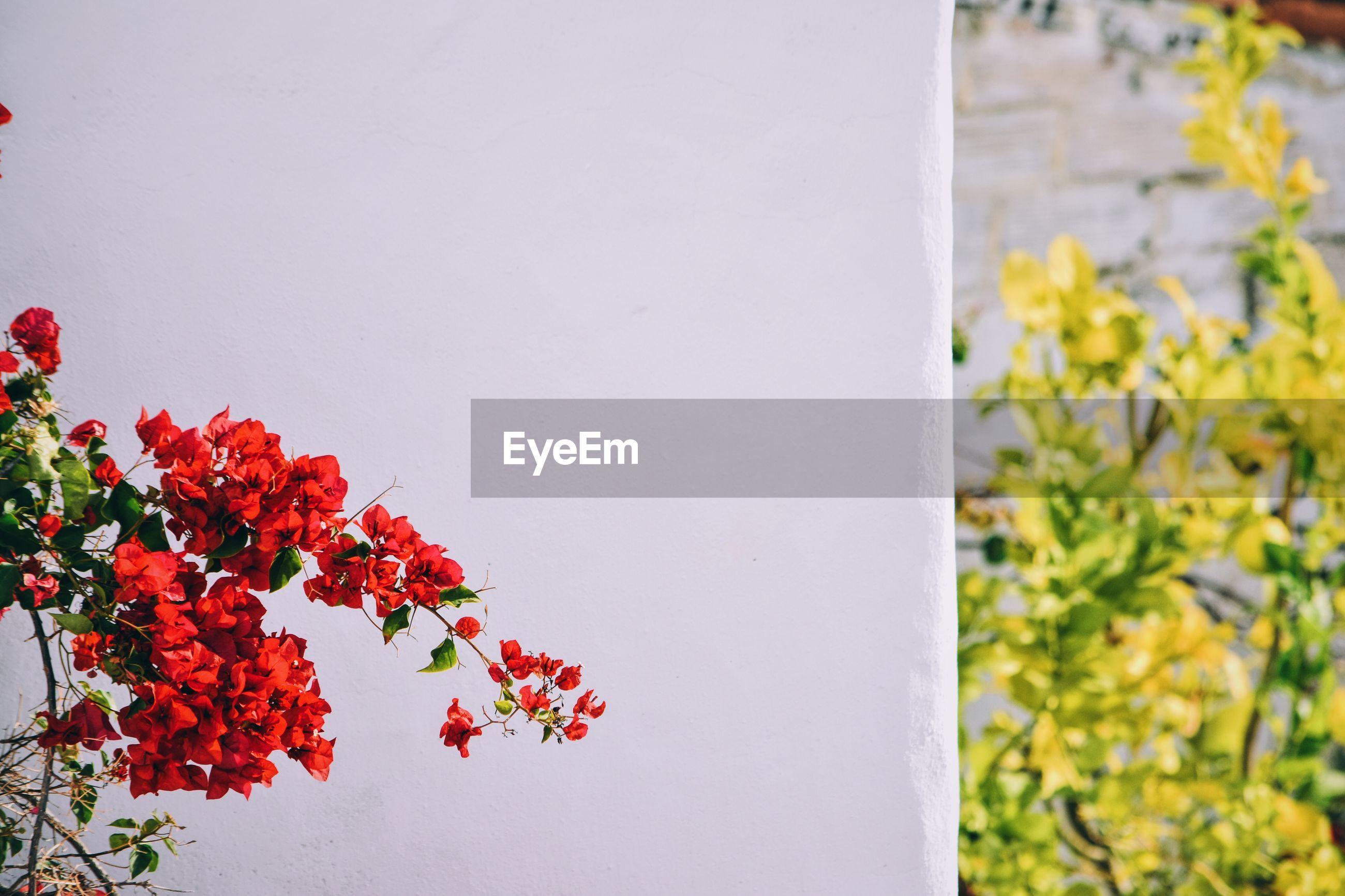 Red flowers blooming against column
