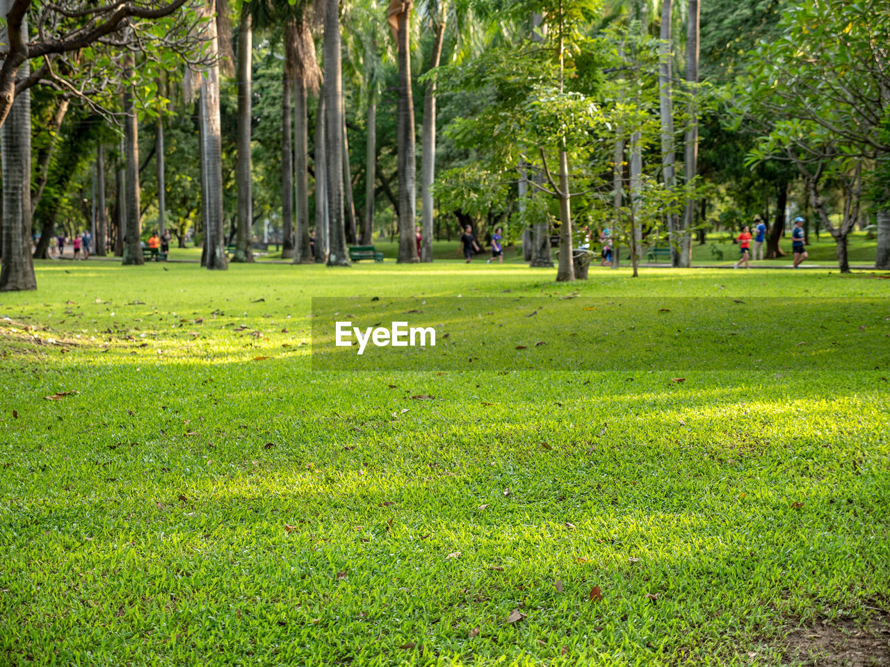 tree, plant, grass, park, green color, nature, park - man made space, day, land, incidental people, growth, people, group of people, outdoors, crowd, environment, lush foliage, beauty in nature, foliage, tranquility