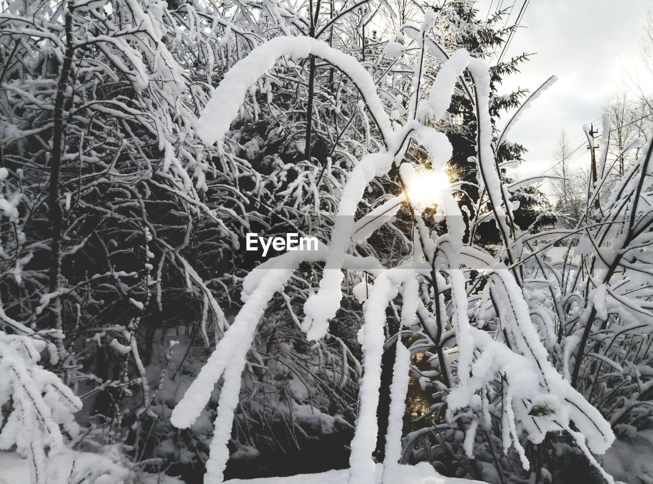 snow, winter, cold temperature, nature, outdoors, no people, field, beauty in nature, day, plant, growth, close-up, sky