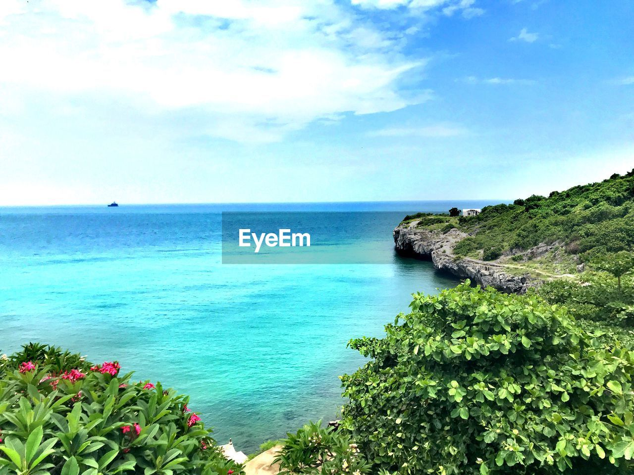 sea, beauty in nature, water, scenics - nature, sky, plant, tranquil scene, horizon, horizon over water, tranquility, nature, cloud - sky, day, growth, land, no people, tree, flower, green color, outdoors, turquoise colored