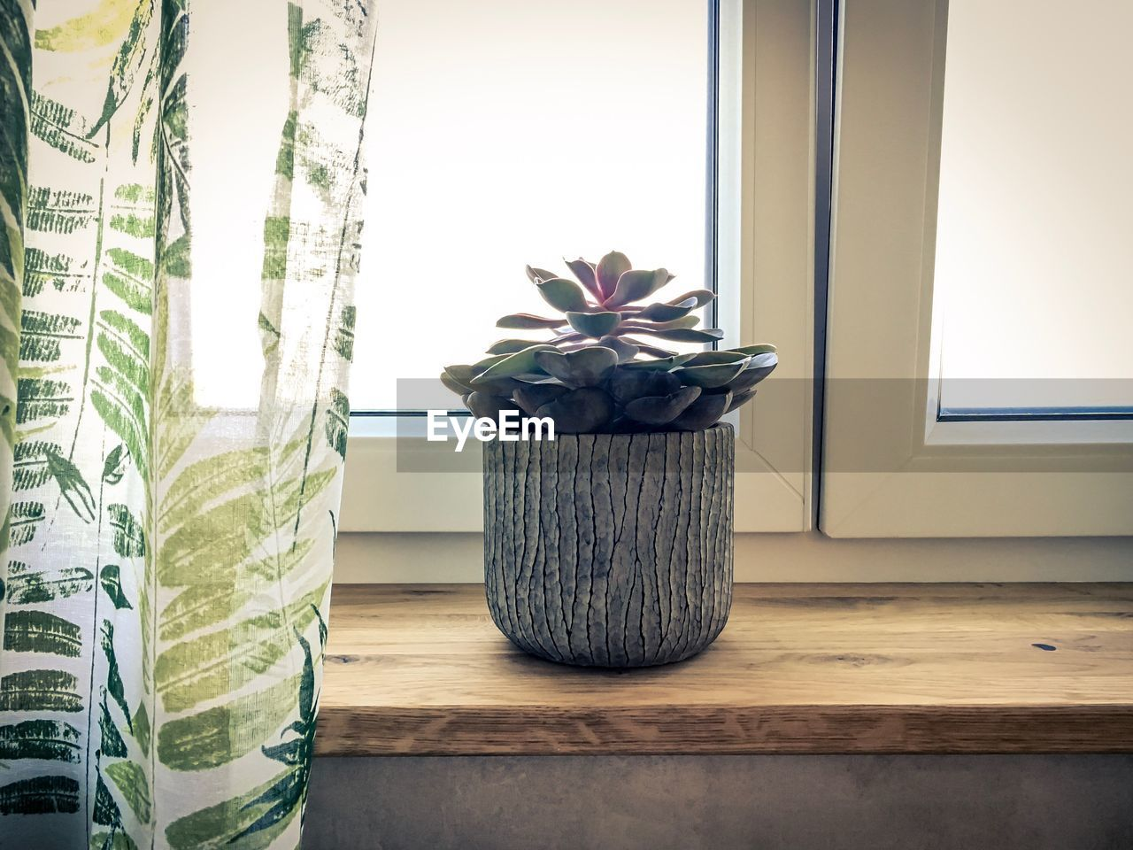 indoors, plant, home interior, potted plant, window, no people, growth, day, curtain, nature, glass - material, window sill, transparent, decoration, close-up, table, flowering plant, flower, houseplant