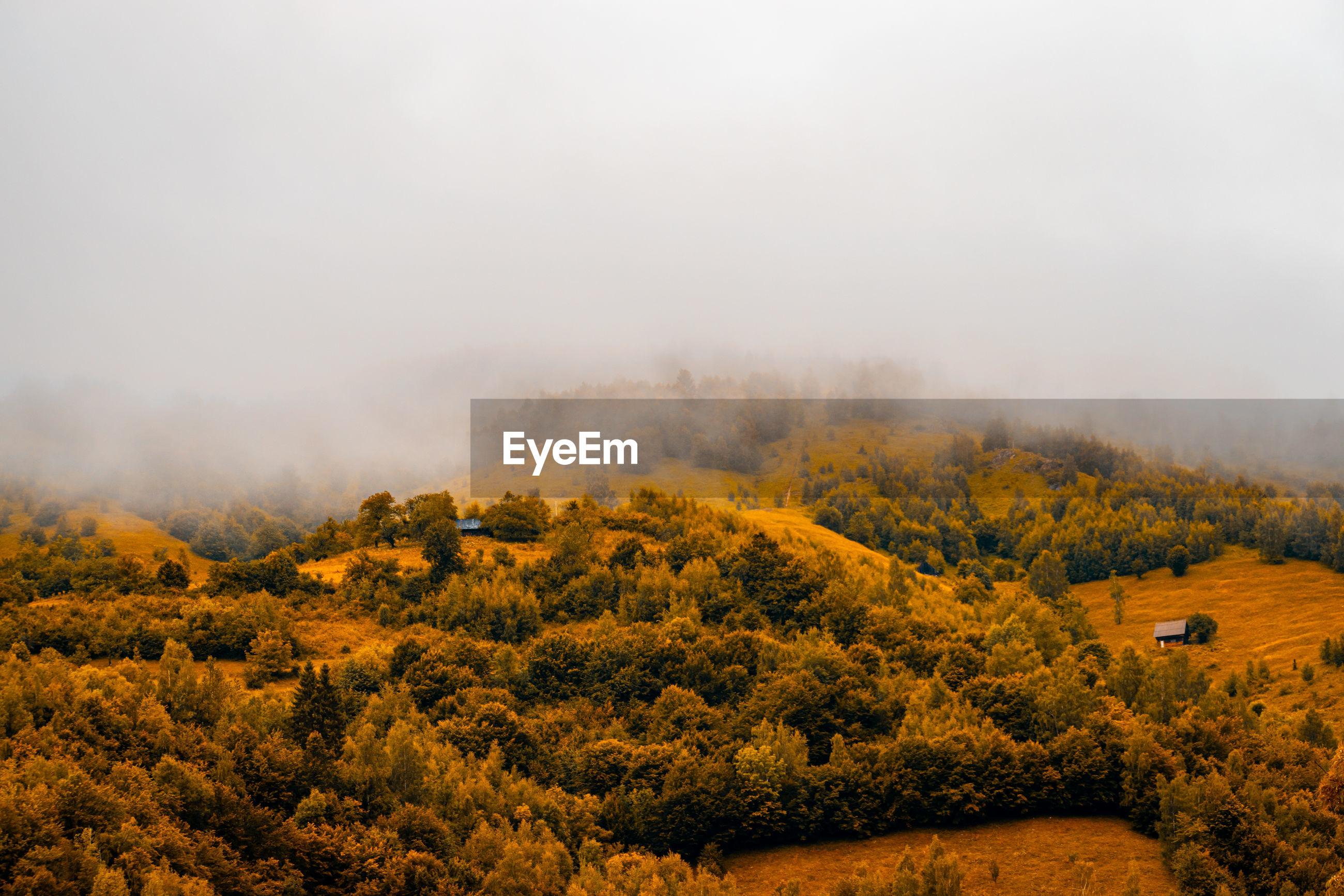 Autumn panoramic landscape of a hill forest in moieciu de jos, brasov, transylvania, romania.