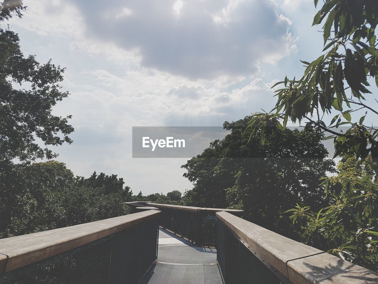 tree, plant, cloud - sky, sky, nature, railing, no people, architecture, growth, day, transportation, built structure, direction, bridge, connection, the way forward, outdoors, diminishing perspective, green color, bridge - man made structure