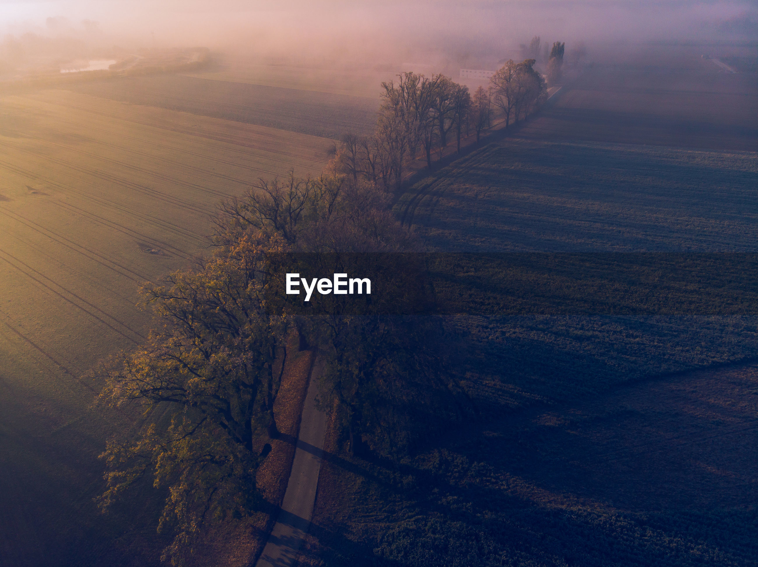 Aerial view of trees on land during sunset