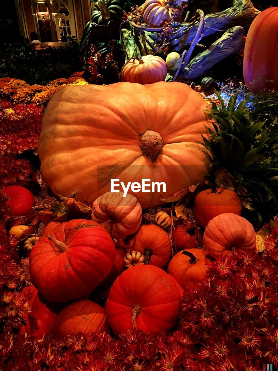 pumpkin, vegetable, halloween, autumn, squash - vegetable, no people, food, plant, freshness, nature, gourd, flower, beauty in nature, day, outdoors