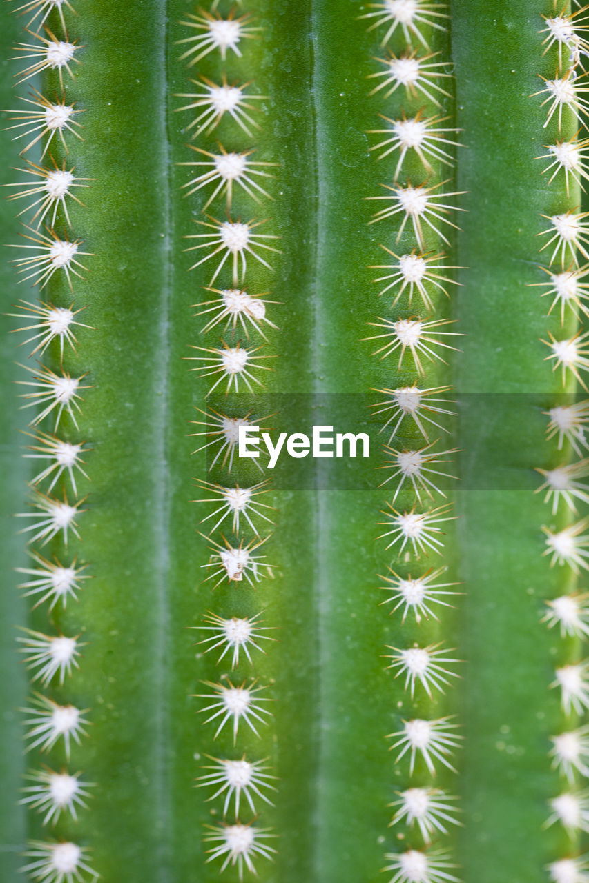 green color, succulent plant, cactus, plant, full frame, no people, nature, growth, thorn, backgrounds, beauty in nature, day, spiked, botany, outdoors, close-up, sharp, pattern, natural pattern, green, spiky