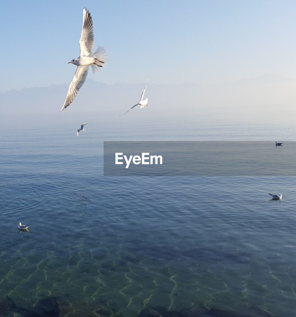 animal themes, bird, animal wildlife, animal, vertebrate, animals in the wild, water, flying, sky, group of animals, sea, spread wings, beauty in nature, waterfront, mid-air, nature, scenics - nature, tranquil scene, seagull, no people, horizon over water, outdoors