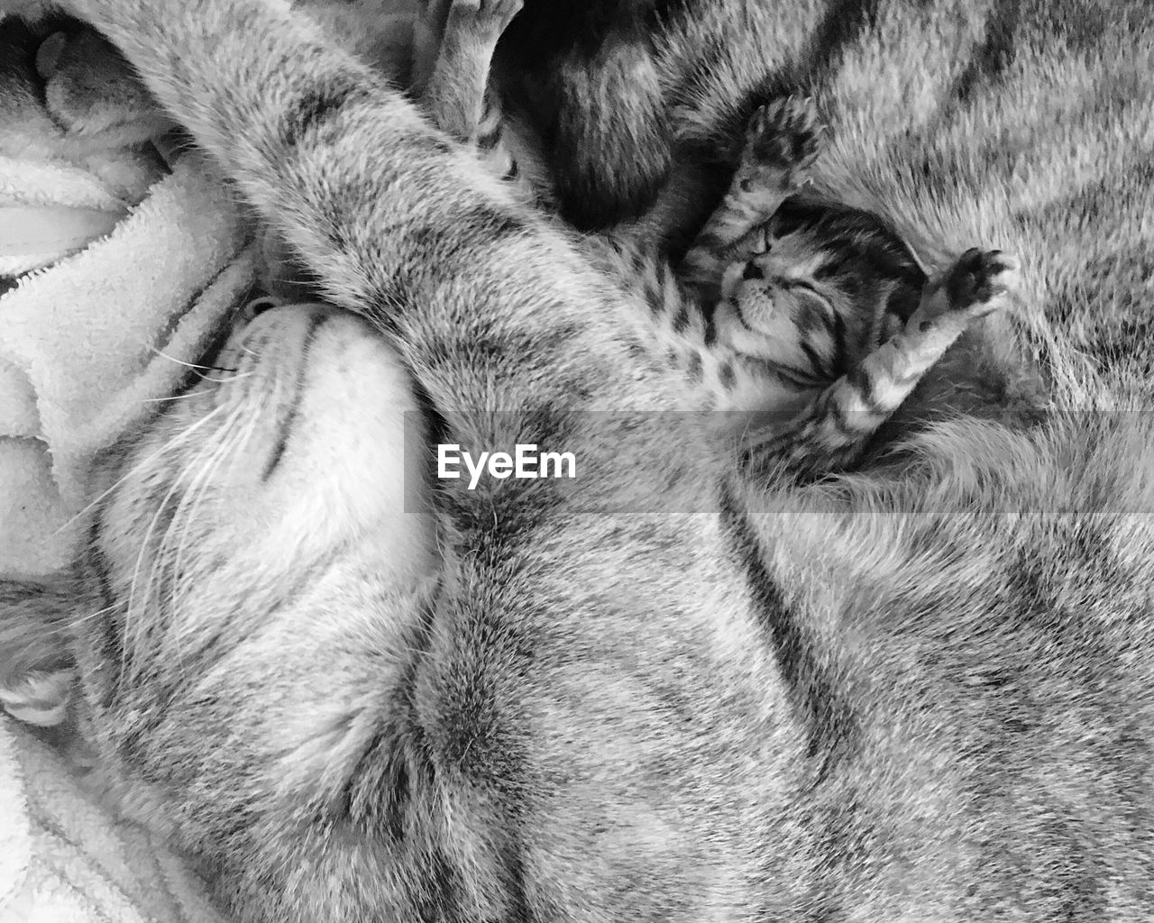 animal, mammal, animal themes, domestic animals, domestic, pets, one animal, relaxation, vertebrate, cat, close-up, no people, sleeping, feline, animal body part, domestic cat, eyes closed, indoors, young animal, animal head, whisker